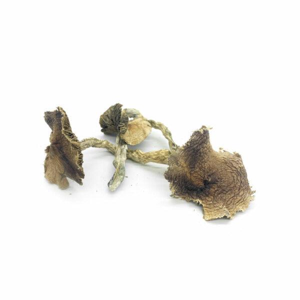 Microdose Mushrooms Wavy Caps