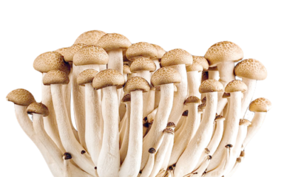 Study: Psilocybin From Magic Mushrooms Plus Therapy Delivers Benefits Nearly Five Years Later