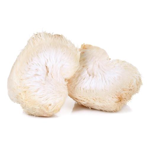 Lion's Mane Mushrooms Benefits
